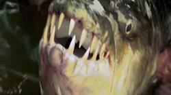Bắt cá hổ khổng lồ ăn thịt được cá sấu ở Congo