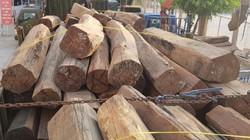 Cần Thơ: Tạm giữ số lượng gỗ căm xe chưa rõ nguồn gốc