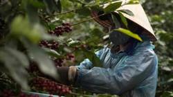 31 tuổi đồng sở hữu hơn 80 cửa hàng cả nước nhờ làm cà phê chất lượng