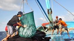Con số giật mình: 83 loài hải sản biến mất khỏi vùng biển Việt Nam