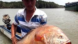 """Thanh niên """"số đỏ"""": Kéo lưới bắt được cá lạ nghi sủ vàng dài cả mét"""