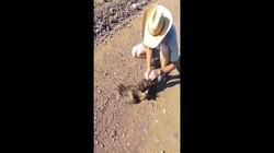 Video: Diều hâu sà xuống săn rắn, không ngờ bị siết cứng đờ
