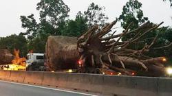 """Tổ công tác đặc biệt của Cục CSGT nói về vụ xe chở cây """"quái thú"""""""