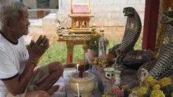 Thái Lan: Nơi hổ mang chúa được coi là thiên thần, có đền thờ