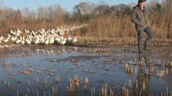Dùng vịt thay thuốc trừ sâu, lúa tốt bời bời lại không độc hại