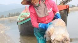 Phấn khởi vụ sứa mới, ngư dân Hà Tĩnh kiếm tiền triệu mỗi ngày