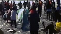 Video: Người dân té nước cứu cá voi khổng lồ bị mắc cạn