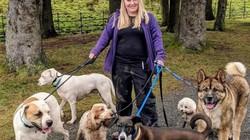 Anh: Chuyên gia về chó bị chính chó của mình tấn công kinh hoàng