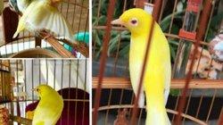 """Clip: """"Lóa mắt"""" trước bộ sưu tập chim màu khủng 10 tỷ ở Việt Nam"""