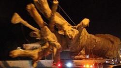 """Vụ 3 cây """"quái thú"""": Cục CSGT báo cáo Bộ Công an và Thủ tướng"""