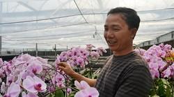 Trồng hoa lan trên đất trà, thu dăm ba tỷ là chuyện thường