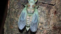 Săn côn trùng làm đặc sản ở nơi vùng cao Nghệ An