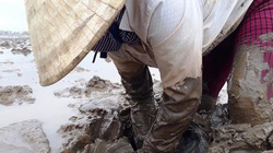 Loại cá kỳ dị nhất hành tinh được ngư dân săn bắt ở biển Thanh Hóa