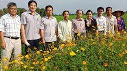 Chùm ảnh: Ruộng lúa, bờ hoa đua nở nhờ làm sạch rác bảo vệ thực vật