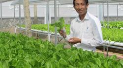 Sức hút từ nông nghiệp 4.0: Trồng hoa, bỏ túi 1.000 USD/tháng