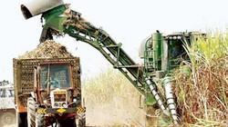 TIN MỚI: Bộ Nông nghiệp quyết định không xây thêm nhà máy mía đường