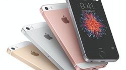 CHÍNH THỨC: iPhone SE 2 đã đạt chứng nhận, sẵn sàng ra mắt