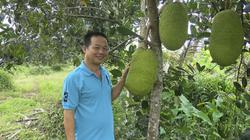 """Phát """"sốt"""" với mít Thái: 1,4 triệu/quả, bán cả vườn được hơn 1,1 tỷ"""