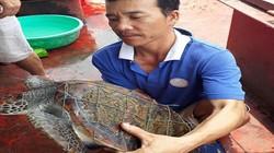 Ngư dân bắt được rùa biển quý hiếm, có hoa văn lạ trên mai