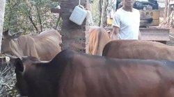 Sơn La: Lạ lùng Trưởng bản có 11 con trâu, bò, ngựa vẫn... hộ nghèo