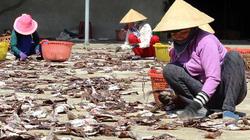 Chuyến đi tiền tỷ: Đi biển 50 ngày bắt 27 tấn mực, thu về hơn 5 tỷ