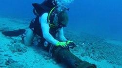 Thông tin bất ngờ về sự cố vừa xảy ra với cáp quang biển APG