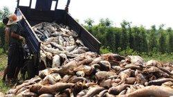 Hàng chục tấn cá bất ngờ chết trắng, người dân lâm cảnh khốn cùng