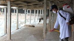 Nhà sạch, chuồng thơm, gia súc gia cầm cứ thế lớn