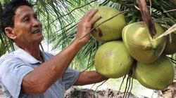 Đến lạ: Cây gì cũng chết mặn, trồng dừa lại có tiền tiêu quanh năm