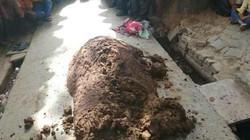 Ấn Độ: Dùng phân bò để chữa rắn cắn và kết cục thảm thương