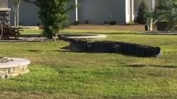 Kinh hãi cá sấu khổng lồ đột nhập nhà dân