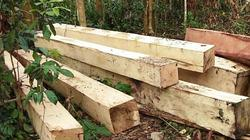 Vụ lâm tặc phá rừng dịp nghỉ lễ ở Gia Lai: Xã không nghe báo cáo