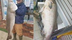 Mỹ: Câu được cá vược khổng lồ, dài gần bằng người đàn ông
