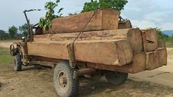 Phá rừng ở Gia Lai: Kiểm tra hàng ngày vẫn mất gần 36 khối gỗ