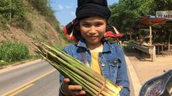 """Bà con người Thái """"đút túi"""" kha khá mỗi ngày nhờ… """"lộc của rừng"""""""