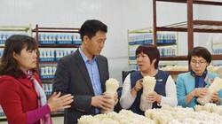 Ngạc nhiên: Trồng nấm công nghệ Nhật, sạch đến nỗi có thể ăn sống