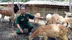 2 bàn tay trắng, cựu binh Lò Văn Lệt phất thành triệu phú nuôi hươu