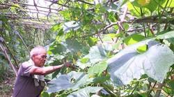 """Lạng Sơn: Tỉnh đầu tiên đưa cử nhân về làm """"nông dân"""" ở 10 HTX"""