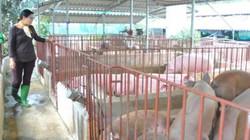 Hà Nội phấn đấu 50% sản phẩm chăn nuôi sản xuất theo chuỗi