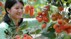 Trái cây Việt chiếm lĩnh thị trường khó tính: Giấc mơ không còn xa
