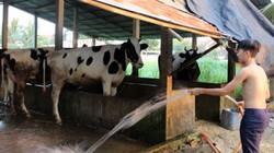 Xử lý chất thải trong chăn nuôi: Cách làm của Củ Chi