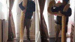 Scotland: Người đàn ông gây hoảng loạn vì để sổng trăn khổng lồ