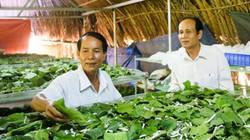 """Bỏ cam, quýt, trồng dâu lấy lá nuôi đàn """"sâu"""", lãi 30-40 triệu/tháng"""