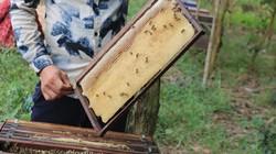 Nông dân Quỳnh Lưu bội thu mùa mật ong nhờ di cư theo mùa hoa