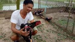 Làm giàu ở nông thôn: Nuôi chơi chơi mà đổi đời nhờ gà chọi