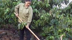 """5 năm tái cơ cấu nông nghiệp: """"Liều thuốc"""" cho lúa gạo và cà phê"""