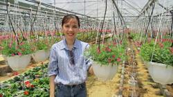 Làm giàu ở nông thôn: Trồng hoa dạ yến thảo, lãi 1 triệu/ngày