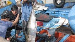 Đà Nẵng: Lập văn phòng kiểm soát tàu cá xuất, cập bến