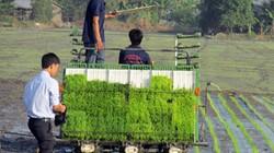 Chuyện lạ: Trồng lúa tốt, có thể được thưởng tới 2,9-3,3 triệu USD