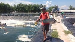 Nắng nóng gay gắt, nông dân Thừa Thiên-Huế lo cứu ao nuôi thủy sản